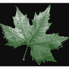 """фото """"The autumn began"""""""