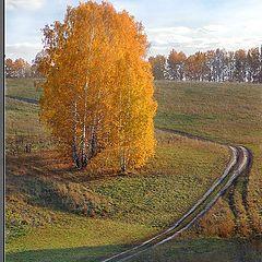 """фото """"Осенний зигзаг"""""""