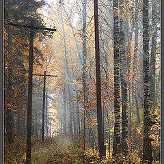 """фото """"Старая просека осенью"""""""