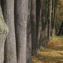 "фото ""Осенний призыв"""