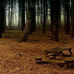 "photo ""The Forest"""