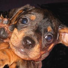 """photo """"DOG"""""""