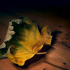 """photo """"Last leaf..."""""""