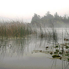 "фото ""Foggy lake 4237"""