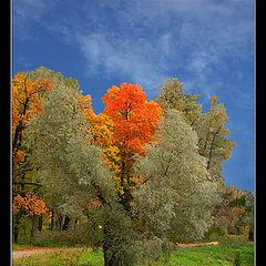 "фото ""Осенние кадры-9"""