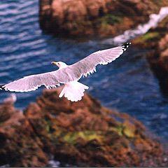 "photo ""The seagull"""