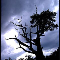 "фото ""spooky tree"""