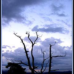 "фото ""spooky tree2"""