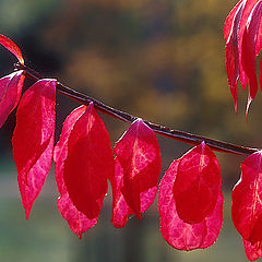 """фото """"Red Leaves"""""""