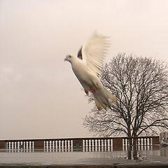"photo ""Angel"""