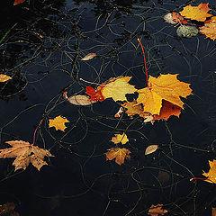 "фото ""Осенние кадры-12"""