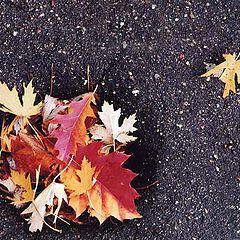 """photo """"Fall oasis"""""""