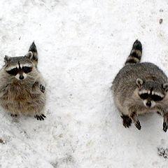 "photo ""We want eating"""