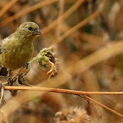 """photo """"Little Bird."""""""