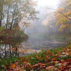 """фото """"Падают, падают, падают листья..."""""""