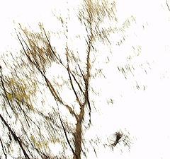 """фото """"Ворона взлетала..."""""""