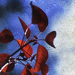 """фото """"Leaves"""""""