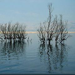 """фото """"Жизнь в Мертвом море"""""""