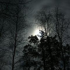 """photo """"Moon light."""""""