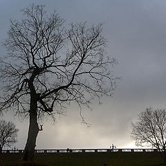 "photo ""Black tree"""
