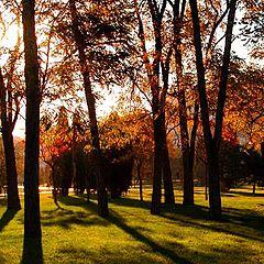 "фото ""Autumn colour"""