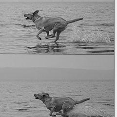 """фото """"Простые движения..."""""""