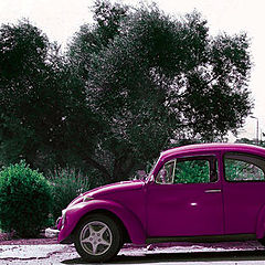 "фото ""Pink bug"""