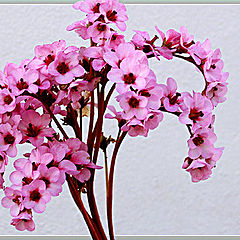 """photo """"Pink flowers"""""""