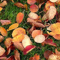 """фото """"Осенний ковёр"""""""