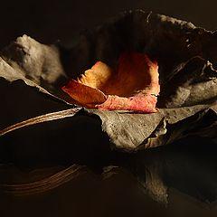 """фото """"Leaf & Petal"""""""