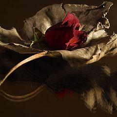 """фото """"Leaf & Rose"""""""