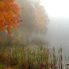 "фото ""Осенние полутона"""