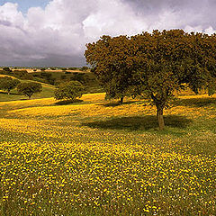 "photo ""Yellow spring"""