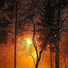 "фото ""Туман"""
