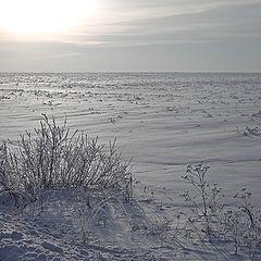"""фото """"Белое солце пустыни..."""""""
