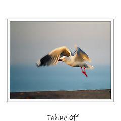 "photo ""Taking Off"""