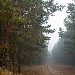 """фото """"pine forest"""""""
