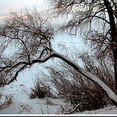 """фото """"зимний рисунок"""""""