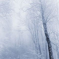 "фото ""Cold"""