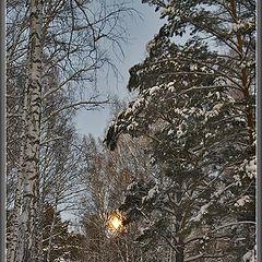 "фото ""Прогулки при полной луне #1"""