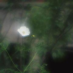 """фото """"Величественная и грустящая..."""""""