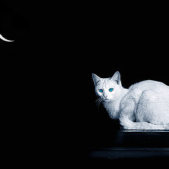 """фото """"The cat of the MOON"""""""