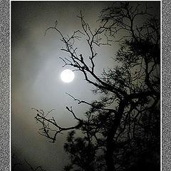 """фото """"Темной ночью"""""""
