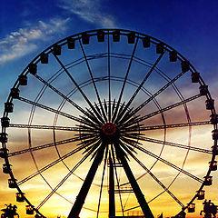 """фото """"Circling at Sunset"""""""