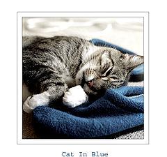 """photo """"Cat In Blue"""""""