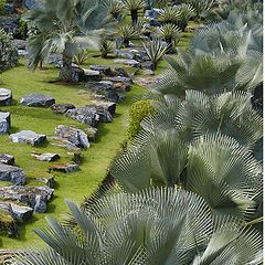 "photo ""Exotic garden: Stones&Palms"""