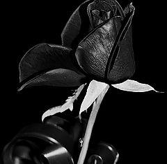 """фото """"Чёрная роза печали"""""""