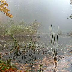 """фото """"Осень играет на медленной скрипке сонату дождей за"""""""