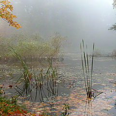 "photo ""Autumn sonata"""