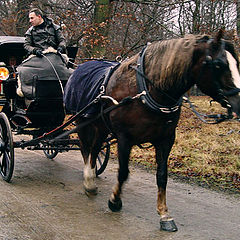 """photo """"Carriage Driving"""""""
